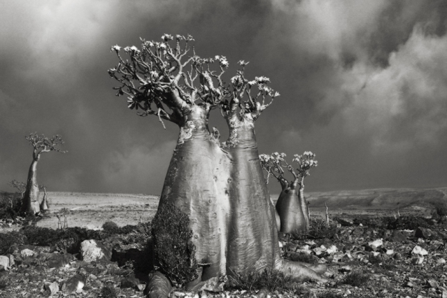 http://www.thisiscolossal.com/2014/12/ancient-trees-beth-moon/